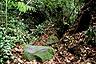 Jungle path in Bako National Park