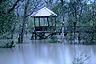 Mangrove forest in Bako National Park