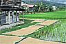 The Kelabit village of Bario
