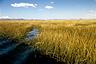 Totora reeds of Lake Titicaca