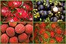 Dragonfruit, mangosteen, lychee, and rambutan